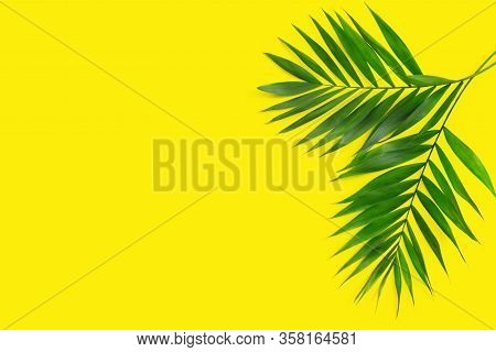 Minimal Tropical Green Palm Leaf On Yellow  Paper Background.  Flat Lay Top View With Copy Space For