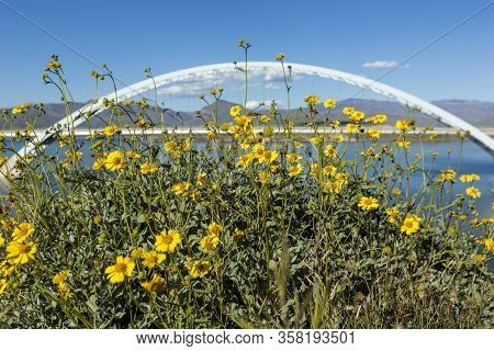 Roosevelt Lake Bridge White Metal Rainbow Arch Over Water Background Flowers In Foreground