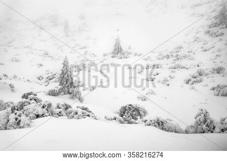 Black and white winter landscape, snowy winter trees. Winter snowy day scene. Monochromatic winter background, panoramic forest view
