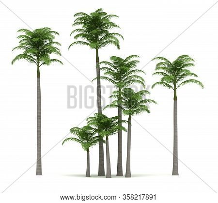 Alexander Palm Trees (isolated On White Background)