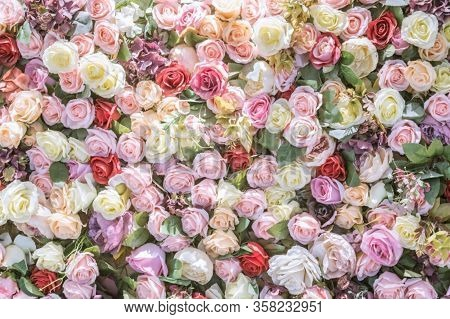 Rose Flower. Pink Rose, Red Rose, Rose Background, Rose In Nature, Rose Images.