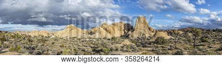 Landscape With Joshua Trees In The Joshua Tree National Park