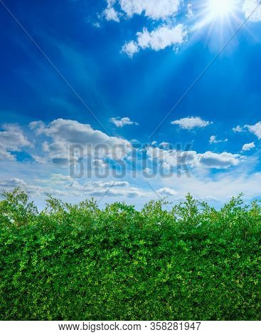 Wall Of Green Leaf Tree With Blue Sky And Cloud For Use Wallpaper, Background