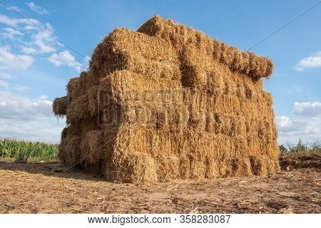 Pile Hay From Dry Rice After Harvest In Thailand