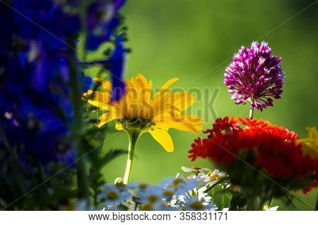 A Bouquet Of Bright Spring Flowers Of Various Types