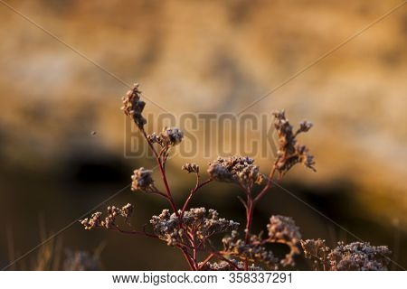 Steppe Flowers On A Background Of The Sea. Nostalgia For Traveling To The Sea Under Quarantine