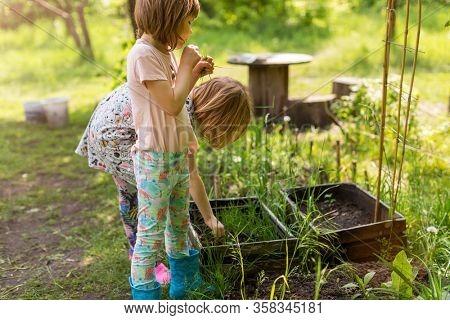 Two little girls gardening in urban community garden
