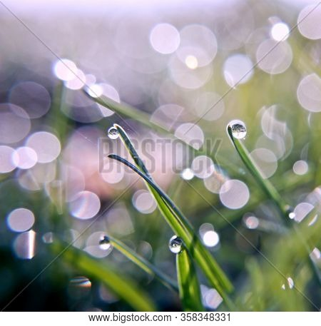 Rain Drops On The Fresh Grass In Spring Time