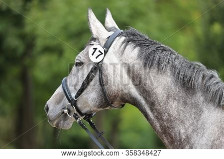 Face Of A  Purebred Gray Horse. Portrait Of Beautiful Gray Mare.  A Head Shot Of A Single Horse. Gre