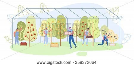 Family Business Fruit Growing In Greenhouse, Slide. Men Overalls Collect Natural Fruits From Trees A