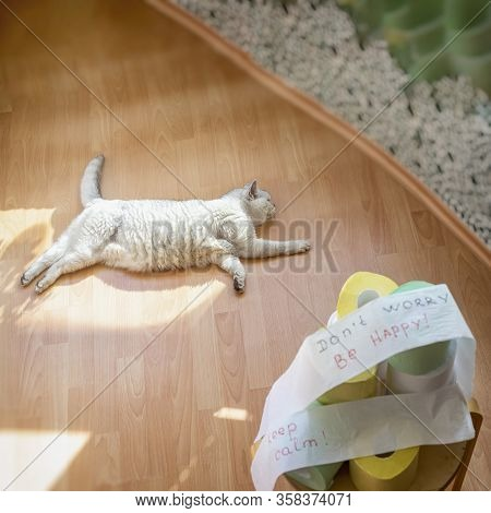 Serene Cat Lying On The Floor Under The Sun Rays, Resting Next To A Blurred Pile Of Toilet Paper Rol