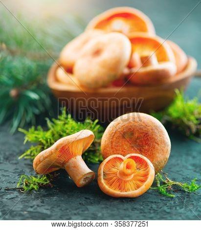 Raw wild Saffron milk cap mushrooms on dark old rustic background. Lactarius deliciosus, Rovellons, Niscalos mushroom closeup. Organic Fresh ceps. Soft focus. Vertical image