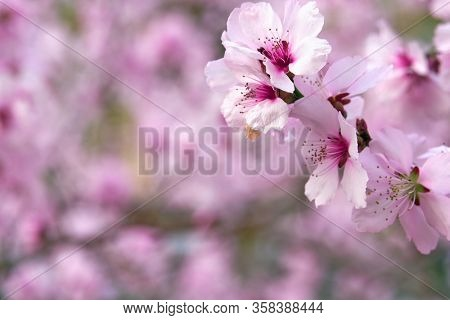 beautiful spring landscape - blooming trees, bright pink and white flowers as background