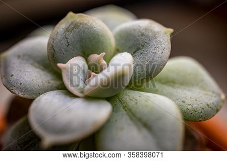 Close Up Of Small Cactus With Soft Selective Focus, Blurred Background And Some Foreground Details.