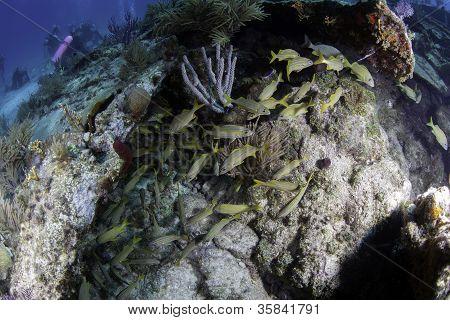 Fish swimming in coral shipwreck