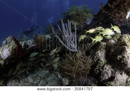 Coral Reef in Key Largo, Florida