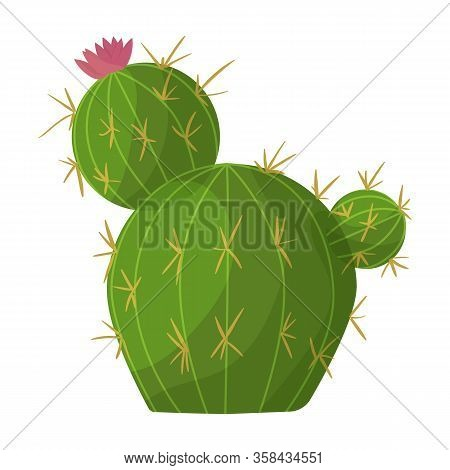 Cactus Of Flower Vector Icon.cartoon Vector Icon Isolated On White Background Cactus Of Flower.