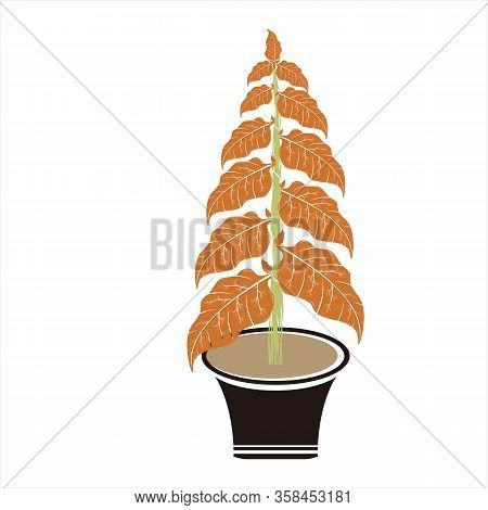 Tobacco Leaf Icon, Isolated Leaf Icon With White Background, Simple Sign Leaf Icon, Brown Leaf Icon,