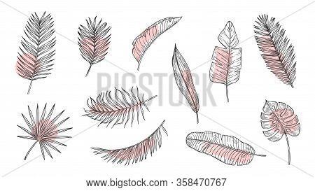 Tropical Leaves Sketch. Floral Foliage, Ink Art Plants. Palm Tree Branch With Paint Brush Strokes. I