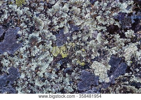 Moss And Lichens On The Rock Surface