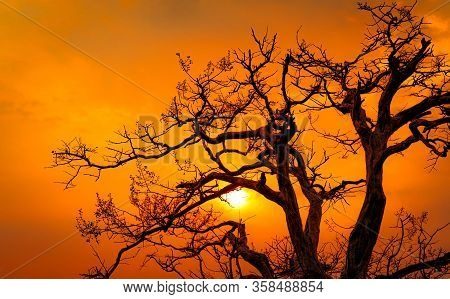 Beautiful Silhouette Leafless Tree And Sunset Sky. Romantic And Peaceful Scene Of Sun, And Golden Sk