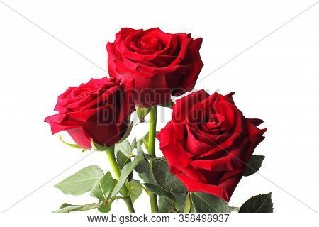 Bouquet Of Three Red Roses On A White Background, Copy Space, Close-up, Isolate.