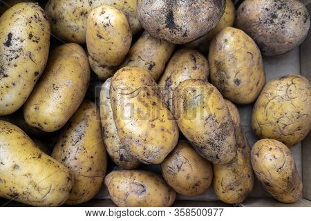Fresh Organic Potato Stand Out Among Many Large Background Potatos In The Market. Heap Of Potatos Ro