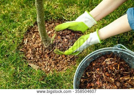 Mulching Around A Tree With Pine Bark Mulch