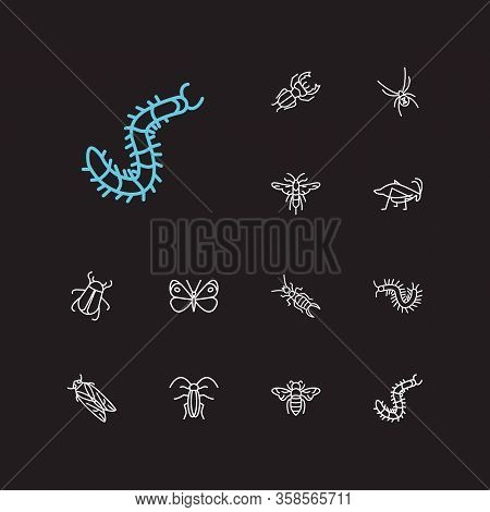Insect Icons Set. Bee And Insect Icons With June Bug, Earwig And Insect. Set Of Farm For Web App Log