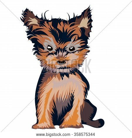 Yorkshire Terrier Puppy Outfitted On White. A Cute Puppy Of The Yorkshire Terrier Is Sitting. Pets.