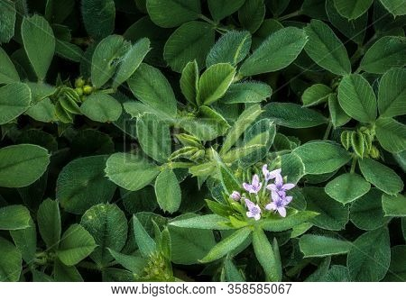 Small Purple Wildflowers Sitting Amongst Lush Green Leaves