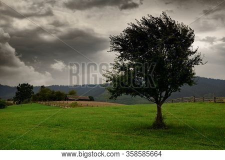 dark clouds, stormy sky and one tree on a meadow in carpathian mountains, wind, countryside, spruces on hills, beautiful nature, summer landscape