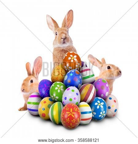 Three curious funny Easter Bunnies peeking and hiding behind a pile of painted decorated or ornate Easter Eggs. Easter Egg Hunt Game and Bunny isolated white background, cut out or cutout