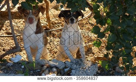 Two Small Cute Dogs Looking Through Wire Fence In Andalusian Village