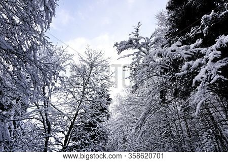 Closeup Of Pine Tree Forest Valley Dreamscape Hallstatt Winter Snow Mountain Landscape Leads To The