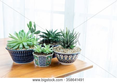Collection Of Various Cactus And Succulent Plants In Different Pots. Potted Cactus House Plants On T
