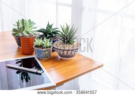 Working At Home With Touch Pad And Succulent Plants On The Table