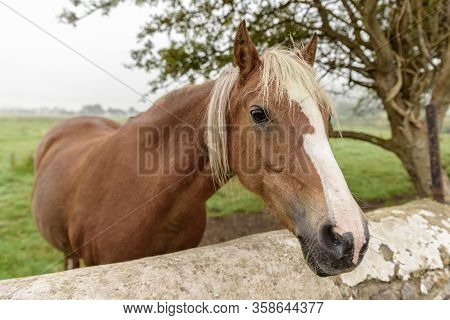 Close Up Of A Brown Horse, With A Light Colored Mane