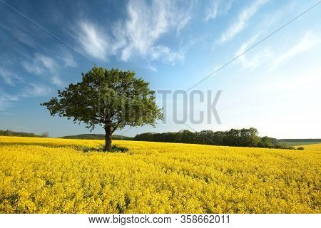 Countryside Oilseed field spring Nature landscape Nature trees Nature background Nature landscape Nature landscape background Nature landscape background Nature landscape Nature landscape Nature background landscape Nature landscape Nature background.
