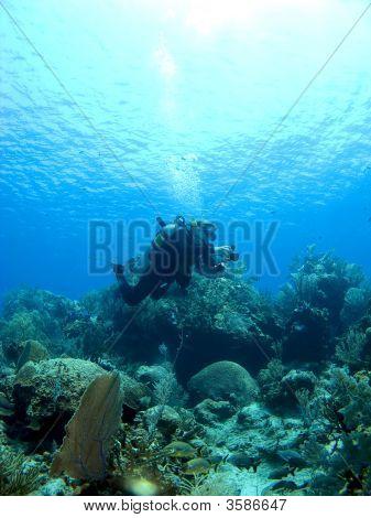 Underwater Photographer Shooting A Cayman Island Reef