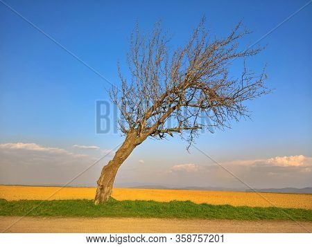 Crooked And Bent Tree In The Field With Sky