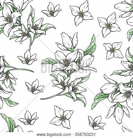Vector Handwork Illustration. Drawing Of Blooming White Jasmine With Green Leaves. Seamless Pattern