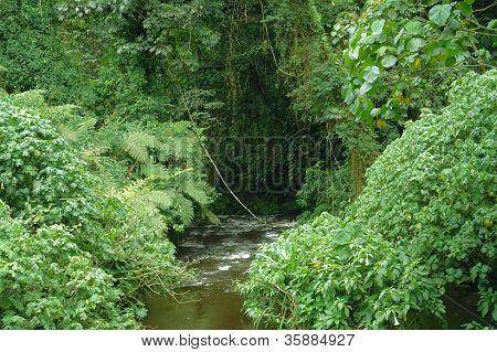 Bwindi Impenetrable Forest In Uganda