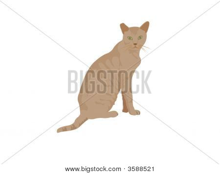a adorable cat on isolated background . poster