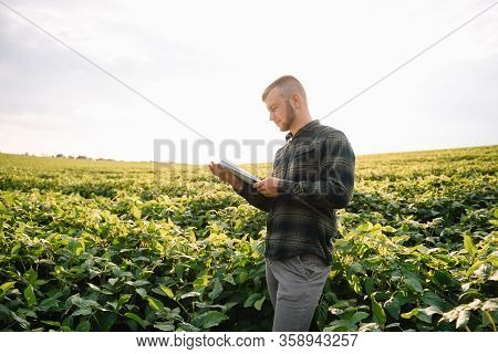 Agronomist Inspecting Soya Bean Crops Growing In The Farm Field. Agriculture Production Concept. Agr