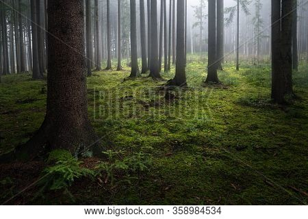 Foggy View From Slovakia Forests. Central Europe.