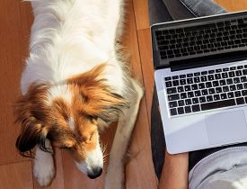 Home Office, Remote Work. Young Man With A Computer Laptop And His Dog. Telecommute, Teleworking, Wo