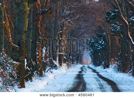 A Snowy Path Into A Canopy Of Trees
