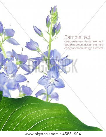 Lovely summer flora against white background. Useful design element. poster