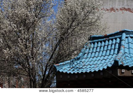 Traditional Asian Rooftop in NYC